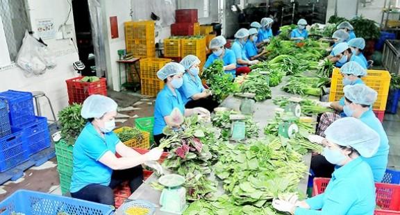 Phê duyệt Điều lệ Liên minh Hợp tác xã Việt Nam (VCA)